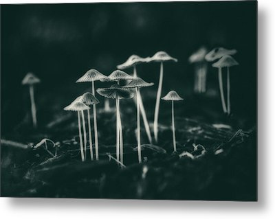Fanciful Fungus Metal Print
