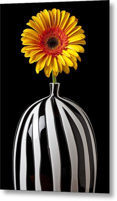 Fancy Daisy In Stripped Vase  Metal Print by Garry Gay