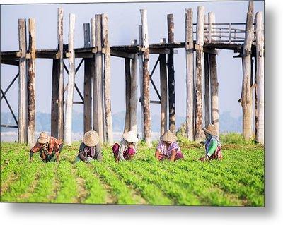 farmers at work around U-Bein Bridge Metal Print