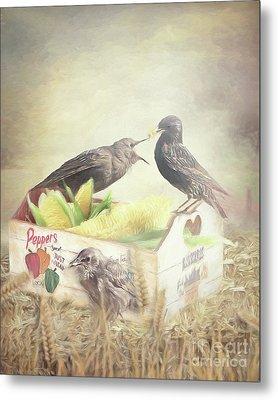 Farmstand Starlings Metal Print by Ulanawa Foote