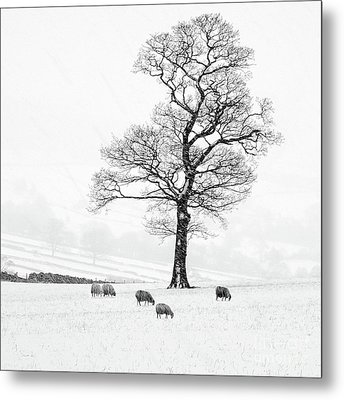 Farndale Winter Metal Print by Janet Burdon