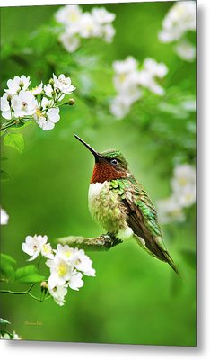 Fauna And Flora - Hummingbird With Flowers Metal Print by Christina Rollo