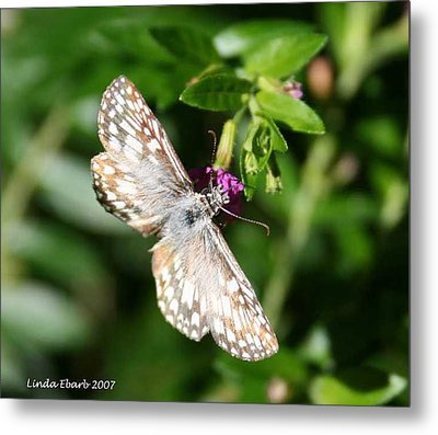 Feast Of Mexican Heather  Metal Print by Linda Ebarb