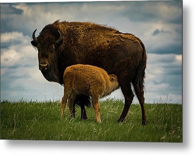 Metal Print featuring the photograph Feeding Time II by Gary Lengyel