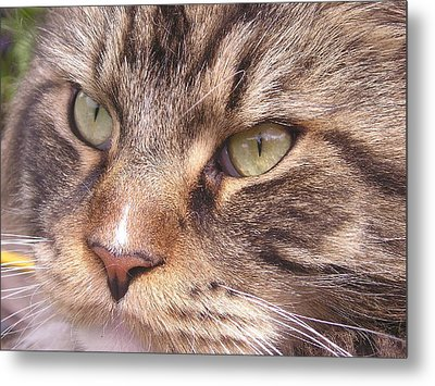 Feline Perfection Metal Print by Joanne Simpson