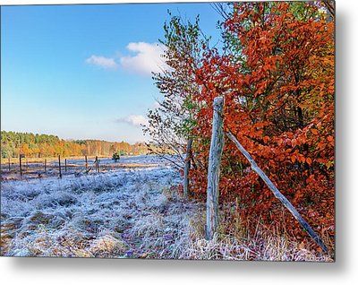 Metal Print featuring the photograph Fenced Autumn by Dmytro Korol