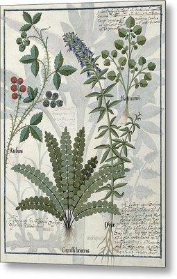 Ferns, Brambles And Flowers Metal Print