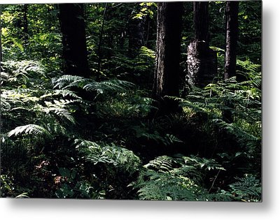 Metal Print featuring the photograph Ferns In The Forest Wc by Lyle Crump