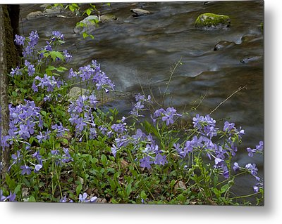 Metal Print featuring the photograph Field Of Purple 3206 by Peter Skiba