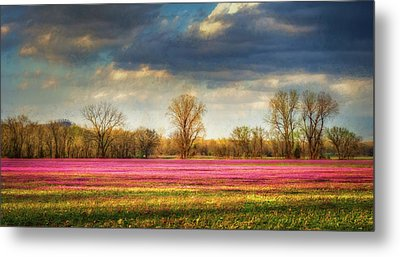Fields Of Clover Metal Print by James Barber