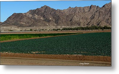 Fields Of Yuma Metal Print by Greg Patzer