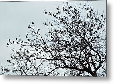 Finches To The Wind Metal Print
