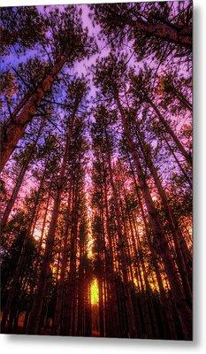 Fire Sky - Sunset At Retzer Nature Center - Waukesha Wisconsin Metal Print by Jennifer Rondinelli Reilly - Fine Art Photography