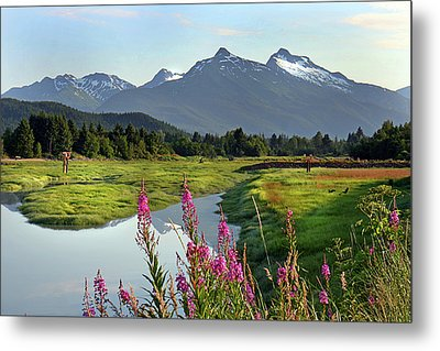 Fireweed Near River. Metal Print by Dagny Willis