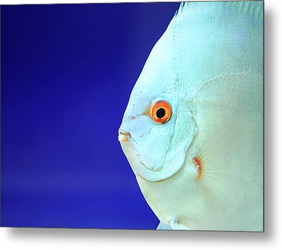 Fish Metal Print by Photography T.N.T