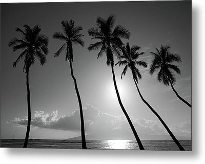 Five Coconut Palms Metal Print by Pierre Leclerc Photography