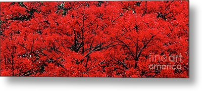 Metal Print featuring the photograph Flaming Red Panorama II By Kaye Menner by Kaye Menner
