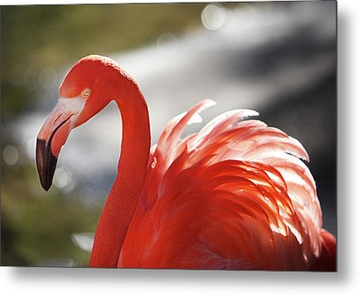 Metal Print featuring the photograph Flamingo 2 by Marie Leslie
