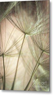 Flamingo Dandelions Metal Print by Iris Greenwell