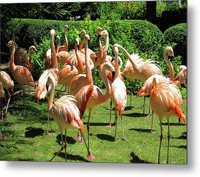 Metal Print featuring the photograph Flamingo Party by Tammy Sutherland
