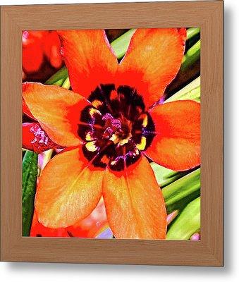 Fleur D'oranger Metal Print