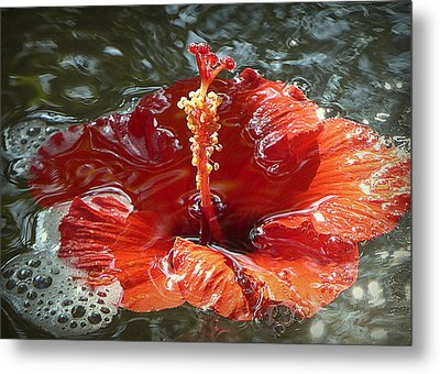 Floating Hibiscus Metal Print by Lori Seaman