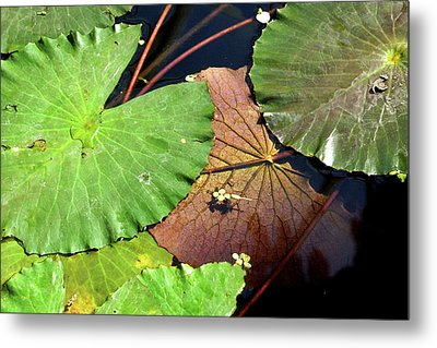 Floating Lily Pads Metal Print