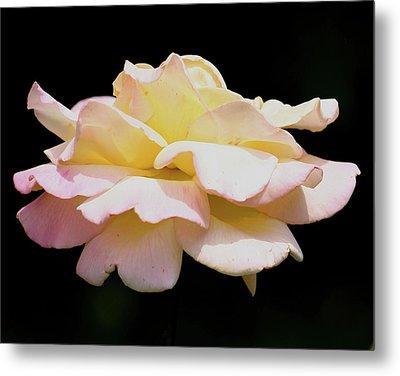 Floating Rose 3894 Metal Print