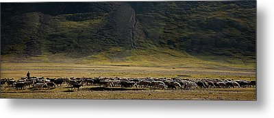 Flock Of Sheep Metal Print by Konstantin Dikovsky