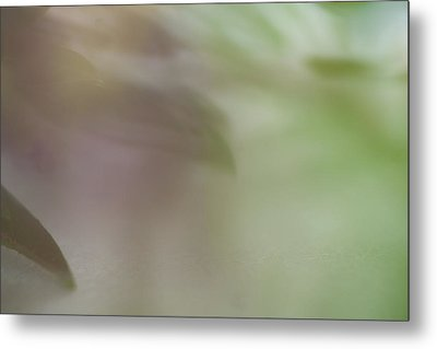 Metal Print featuring the photograph Floral Abstract by Roger Mullenhour