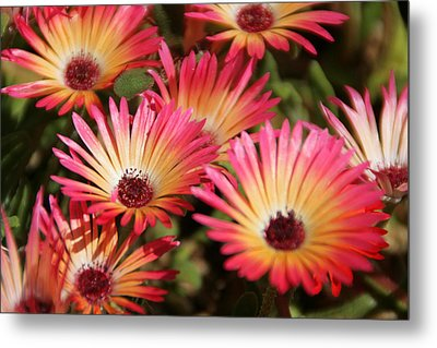 Floral Expectancy Metal Print by Andrea Jean
