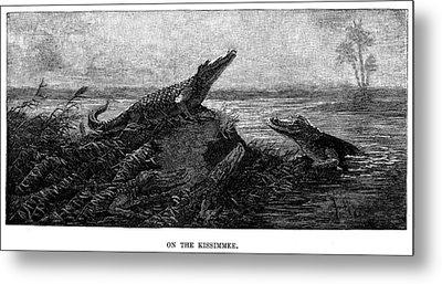 Florida Alligators, 1886 Metal Print by Granger