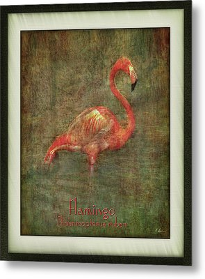 Metal Print featuring the photograph Florida Art by Hanny Heim