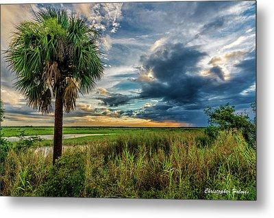 Florida Landscape II Metal Print