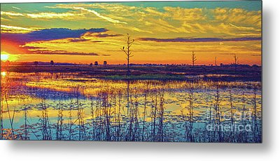 Florida Nature Paradise 2  Metal Print