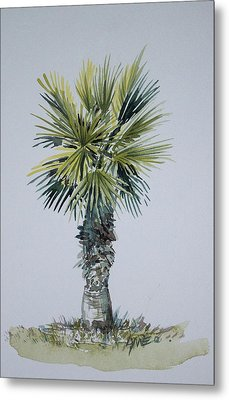 Florida Palm Botanical Metal Print