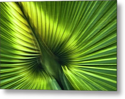 Florida Palm Frond Metal Print by Carolyn Marshall