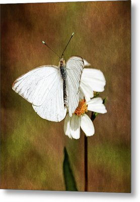 Metal Print featuring the photograph Florida White by Dawn Currie