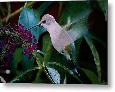 Flower And Hummingbird Metal Print