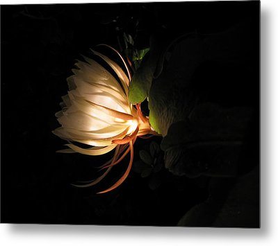 Flower Of The Night 03 Metal Print by Andrea Jean