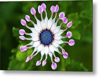 Flower Metal Print by Simon Anderson