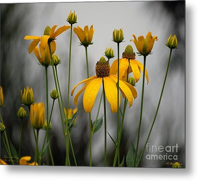 Flowers In The Rain Metal Print by Robert Meanor