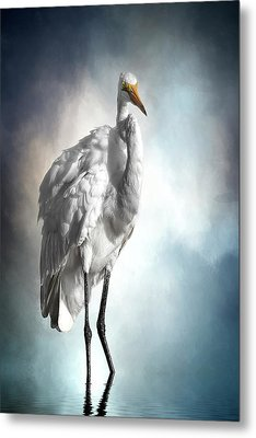 Fluffed And Plumped Metal Print