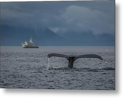 Fluke And A Fishing Boat Metal Print