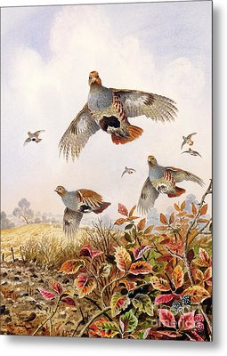 Flushed Partridges Metal Print