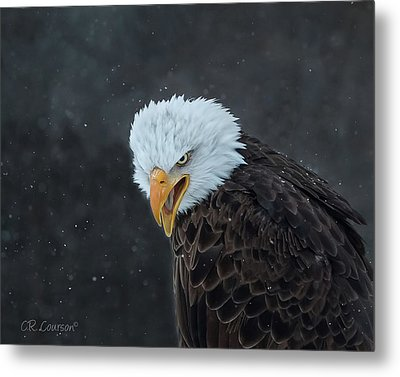 Focused Metal Print by CR Courson