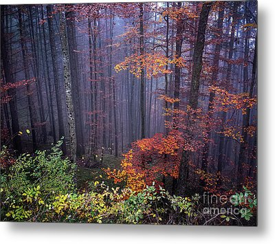 Fog And Forest Colours Metal Print