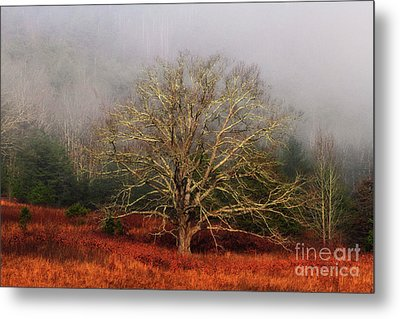 Fog Tree Metal Print