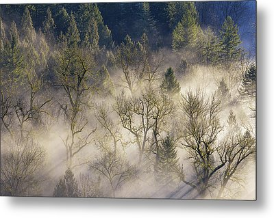 Foggy Morning In Sandy River Valley Metal Print by David Gn