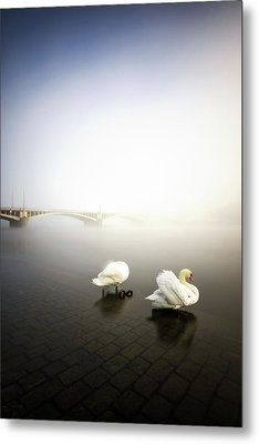 Foggy Morning View Near Bridge With Two Swans At Vltava River, Prague, Czech Republic Metal Print
